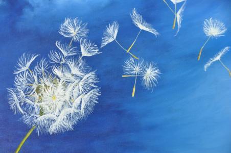 fleur nuage reflechir