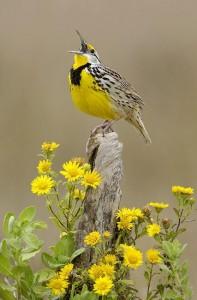 PIOU oiseau soleil ohé enfin super contente fleur jaune help sos