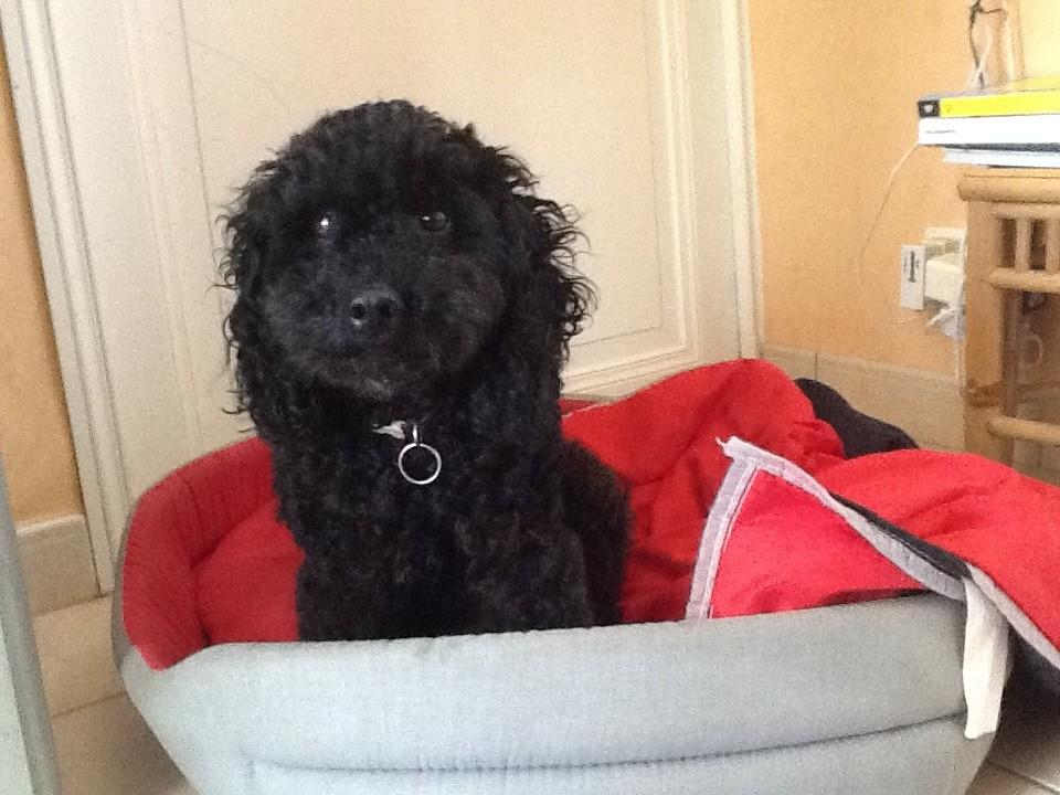 sant esp rance et p che archives du blog dagobert le chien qui sent mauvais. Black Bedroom Furniture Sets. Home Design Ideas