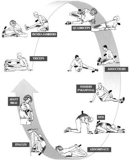 etirements musculation